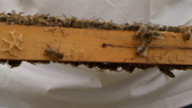 vidéos et rushes de bees in hive - ruche