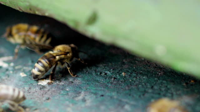Bees in Slow Motion