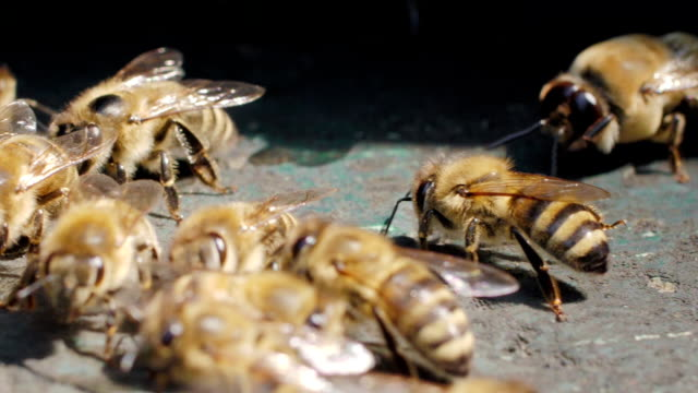 bees in slow motion - tiergruppe stock-videos und b-roll-filmmaterial