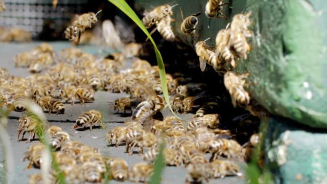 bees in slow motion - 四肢点の映像素材/bロール