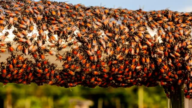 都市の時間経過 4 k の蜂 - 虫除け点の映像素材/bロール
