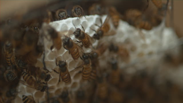 Bees inside a Bee Hive