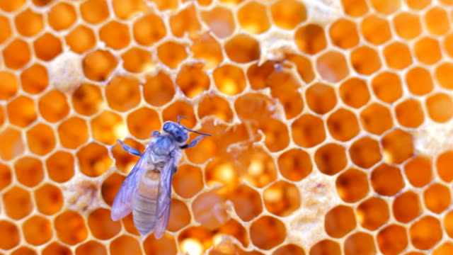 bees on honeycells - beehive stock videos & royalty-free footage