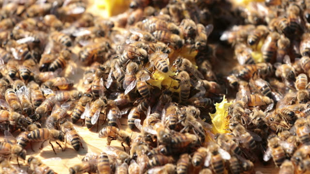 bees on honeycomb close up - colony stock videos & royalty-free footage