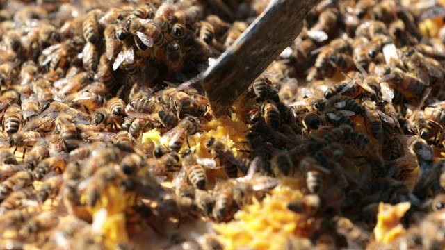 bees on honeycomb close up - food state stock videos and b-roll footage