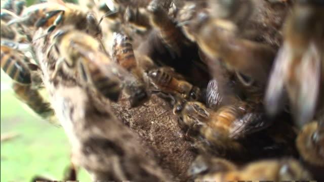 bees swarm around a stone structure. - gliedmaßen körperteile stock-videos und b-roll-filmmaterial