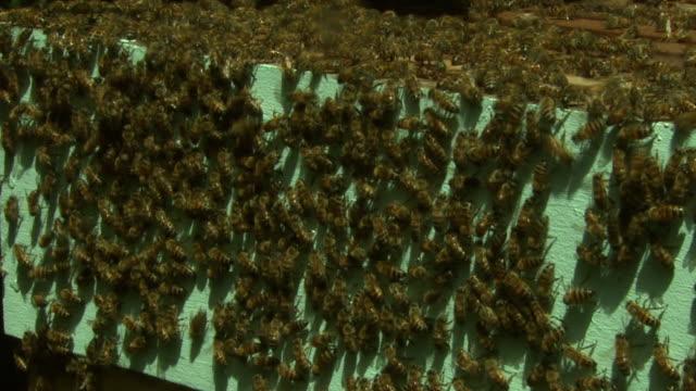 bees swarm over wooden hives. - 虫の群れ点の映像素材/bロール