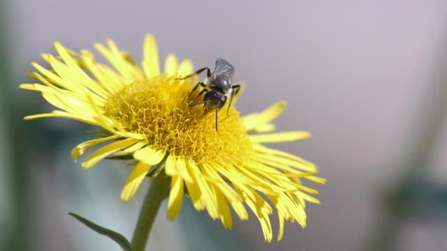 bees take nectar - stem stock videos & royalty-free footage