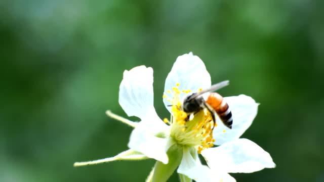bin vars blommor blommar på morgonen - ståndare bildbanksvideor och videomaterial från bakom kulisserna