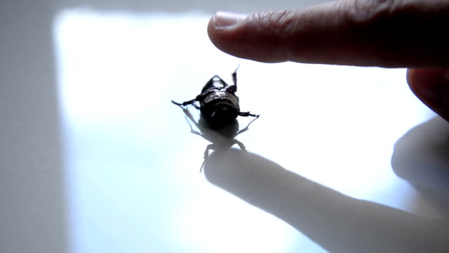 beetle bug - lying on back stock videos & royalty-free footage