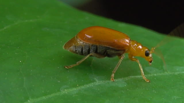 Beetle crawling on a leaf