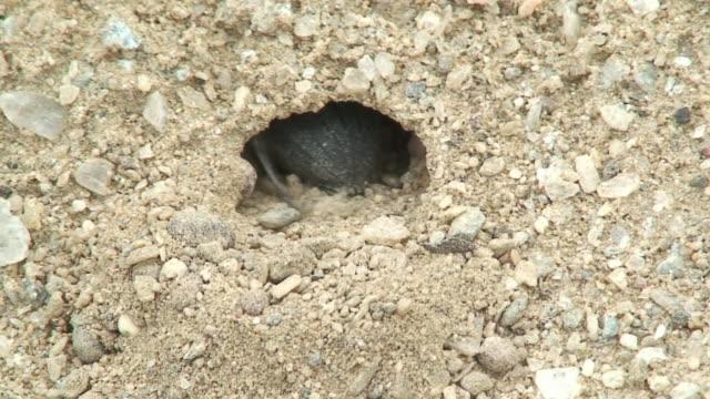 Beetle diggin a hole