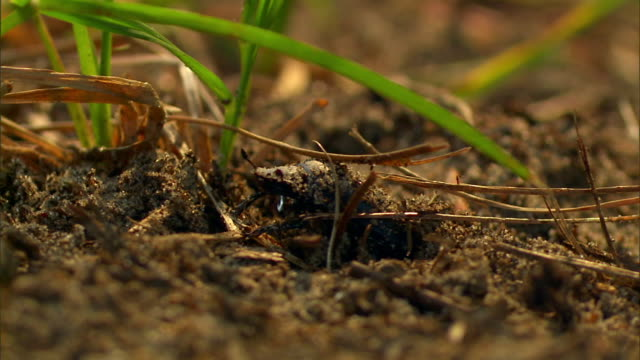 a beetle exits a hole and crawls under a blade of grass. - blade of grass点の映像素材/bロール