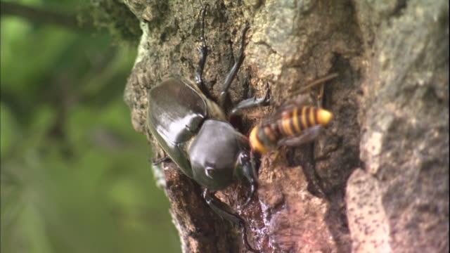 A beetle feeds on tree sap as wasps and other insects crawl around nearby.