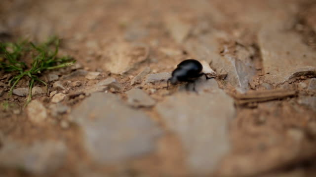 beetle in the nature - south africa stock videos & royalty-free footage