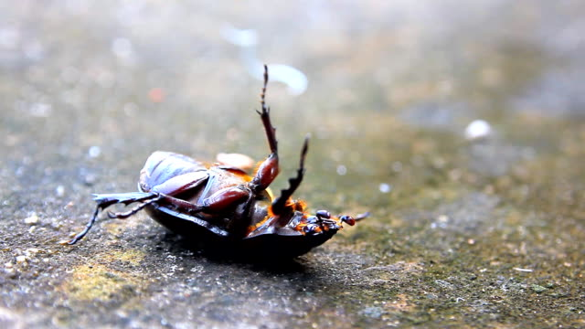 beetle lying on back wakes up - beetle stock videos & royalty-free footage