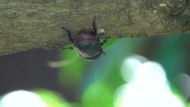植物樹皮のカブトムシ - 木肌点の映像素材/bロール