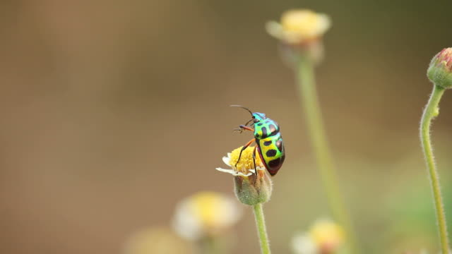 beetle on flower - turquoise coloured stock videos & royalty-free footage