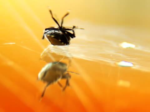 vídeos y material grabado en eventos de stock de escarabajo en el espejo intentando con más detalle - escarabajo de cuerno largo