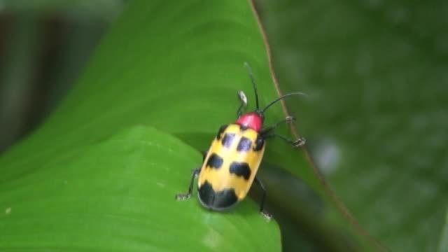 vídeos y material grabado en eventos de stock de escarabajo de salida - escarabajo de cuerno largo