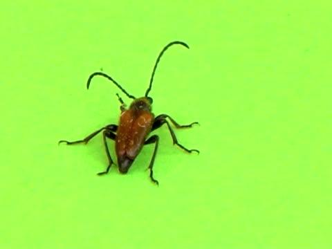 pal: coleottero - insetto video stock e b–roll