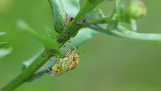 beetle - invertebrate stock videos & royalty-free footage