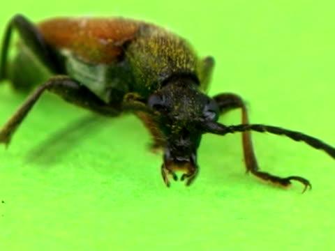 pal: beetle - invertebrate stock videos & royalty-free footage