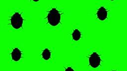 Beetles running up