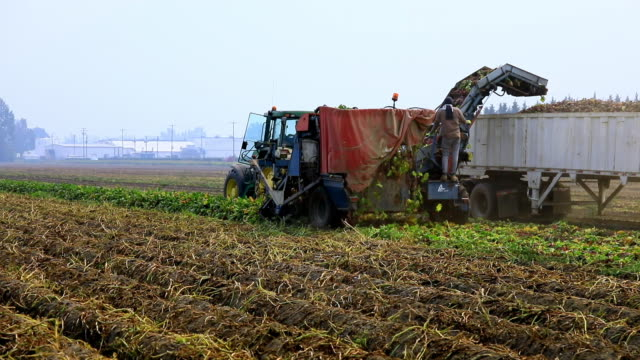beetroot harvester action - ground perspective - fertilizer stock videos & royalty-free footage