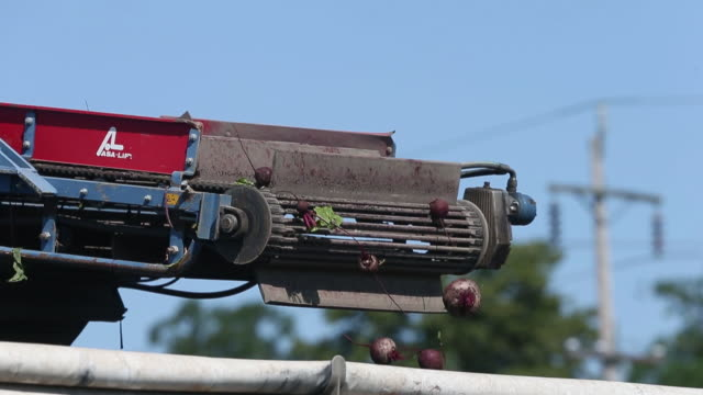 beets are harvested at jamor farms in portage la prairie manitoba canada on thursday july 25 2019 - マニトバ州点の映像素材/bロール
