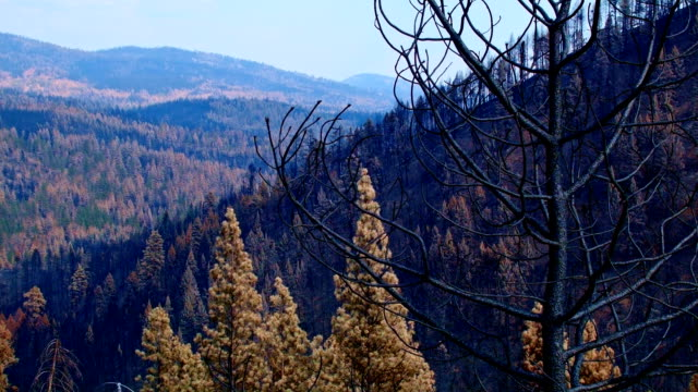 before and after canyon creek complex fire in malheur national forest oregon burned forest from same location in 2016 2 - national forest stock videos and b-roll footage