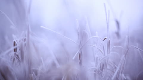 stockvideo's en b-roll-footage met beginning of winter - autumn