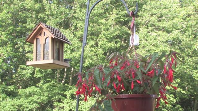 begonia and birdfeeder 1 - hd 30f - birdhouse stock videos & royalty-free footage