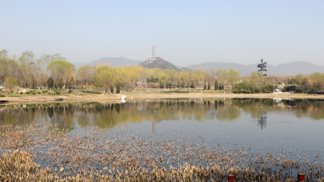 stockvideo's en b-roll-footage met beijing beiwu park,china - oefeningen met lichaamsgewicht