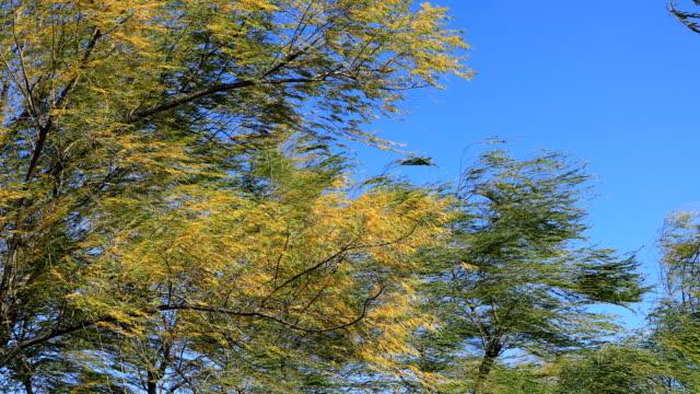 beijing botanical garden,china - 吹く点の映像素材/bロール