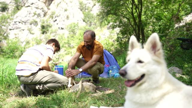 vídeos y material grabado en eventos de stock de malinois belga acostado en hierba en el camping - perro cazador