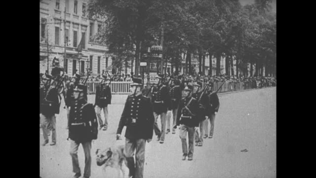 belgian troops march in formation on brussels street, toward and past camera, some with dogs on leashes / mounted belgian soldier leads another troop... - cavalry stock videos & royalty-free footage