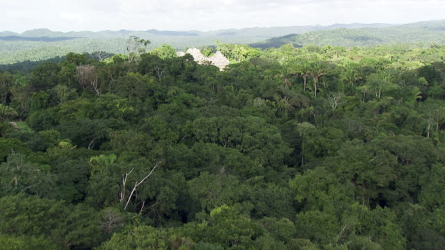 belize: caracol maya temple - ruine stock-videos und b-roll-filmmaterial