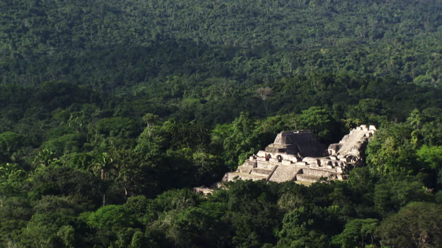 belize: caracol maya temple - caracol stock videos and b-roll footage