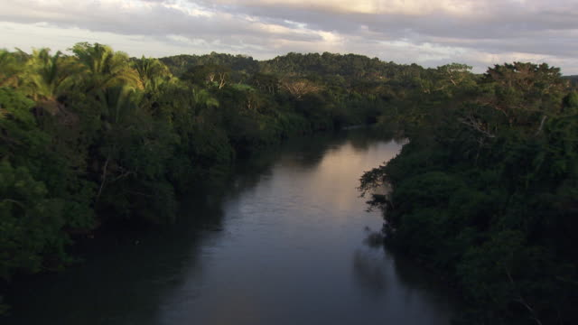 belize: macal river - caribbean sea stock videos & royalty-free footage