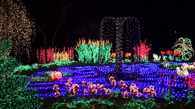 ws bellevue botanical garden illuminated with holiday lights, bellevue, washington, usa - botanical garden stock videos & royalty-free footage