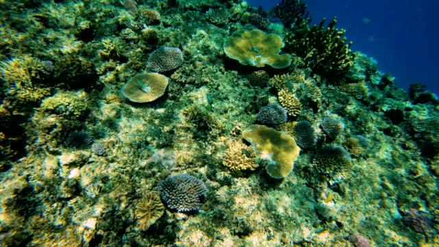 Below surface view of ocean coral reef Fiji