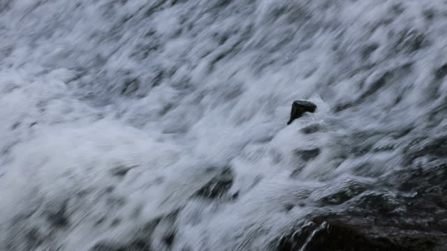 Below the waterfall small fish.