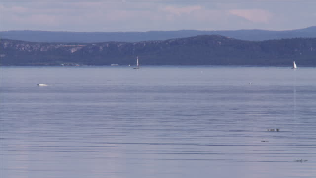beluga whales in st. lawrence river - quebec stock videos and b-roll footage