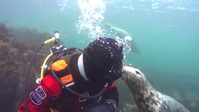 ben burville had his hands full as he dived in the waters off the english coast on october 29 as a mischievous grey seal attempted to remove his... - 20 29 years stock videos & royalty-free footage