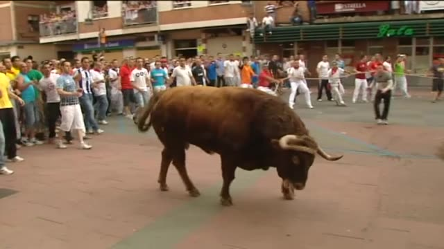 vídeos de stock e filmes b-roll de benavente , 7 jun .- the bull 'dibujante', which was tied to a rope by town's citizens and run through the streets of benavente, has injured five... - touro animal macho