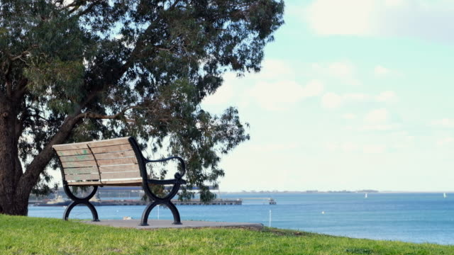 bench beside big tree in park. - bench stock videos & royalty-free footage