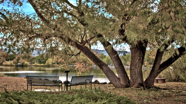 bench in the park at us - poster design stock videos & royalty-free footage