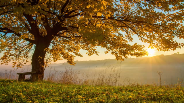 T/L Bench under the autumn tree at sunrise