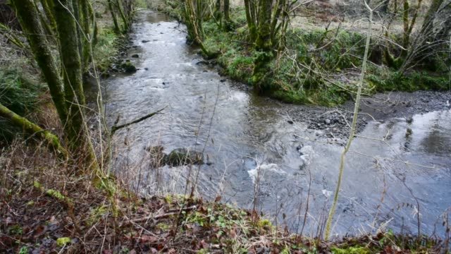 bend in the river, water of gregg, ayrshire. - david johnson stock videos & royalty-free footage